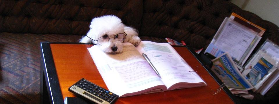 Dog writer